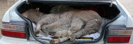 http://www.baytallaah.com/morevideos/animals.jpg